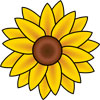Helianthus Homeopathy